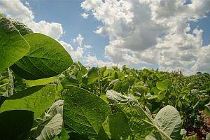 La soja trepó 1,8% a u$s 522,87