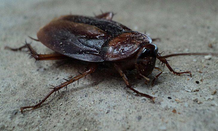 Millones de cucarachas: la estrategia de China para eliminar residuos