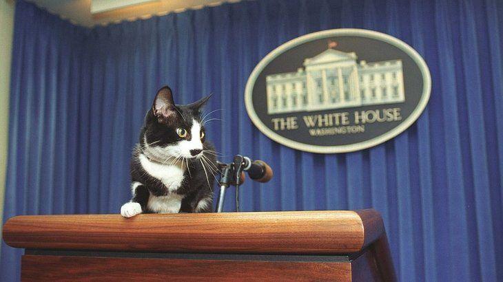 Socks, el gato de la Casa Blanca durante el mandato de Bill Clinton.