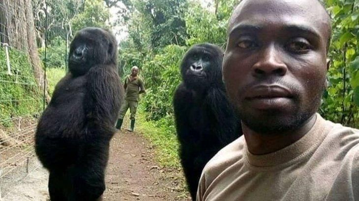 Selfie con gorilas: la insólita foto viral donde los animales parecen modelos