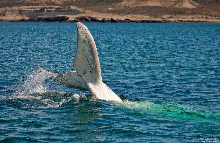 El turismo en la región gira en torno al avistaje de la ballena franca austral.