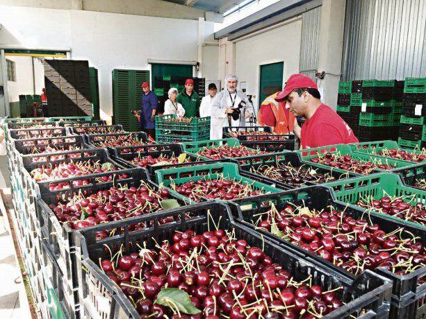 impacto regional. La apertura del mercado tailandés beneficia las producciones de frutas de Río Negro