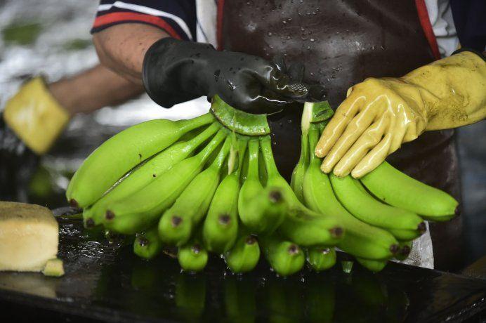 La banana ecuatoriana concentra el 70% del mercado argentino.