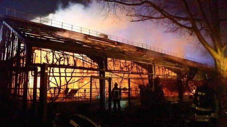 Las llamas consumieron parte del zoo y causó decenas de animales muertos.