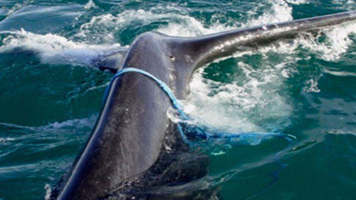 Las redes ponen en peligro la vida  en los océanos.