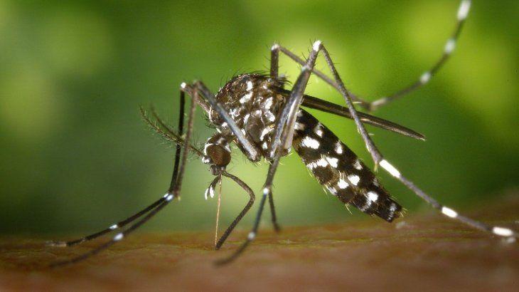 Hasta el momento se registraron más de 50 mil casos de dengue.