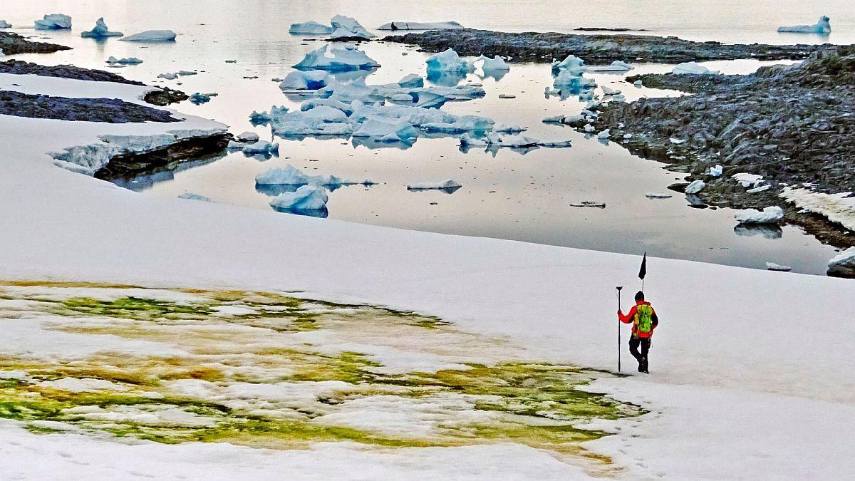 Guía del cambio climático: ¿Por qué la Antártida se está volviendo verde? | Cambio climático, Calentamiento global, Ciencia