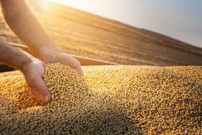 Chinaautorizó la importación de una variedad local desojamodificada genéticamente