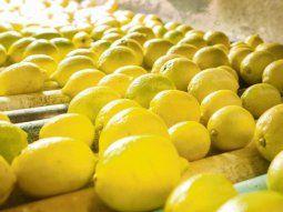 mancha negra frena la exportacion de limones