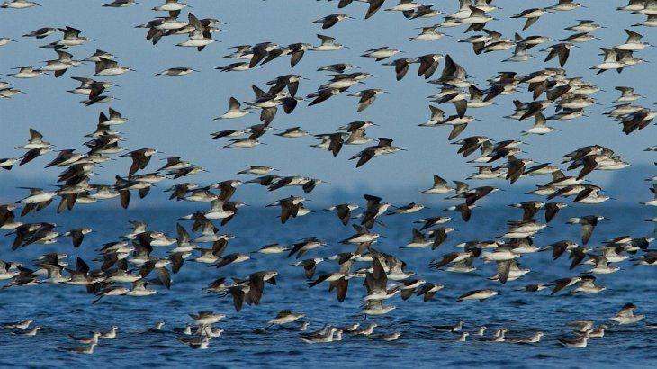 Las aves están expuestas a distintas amenazas.