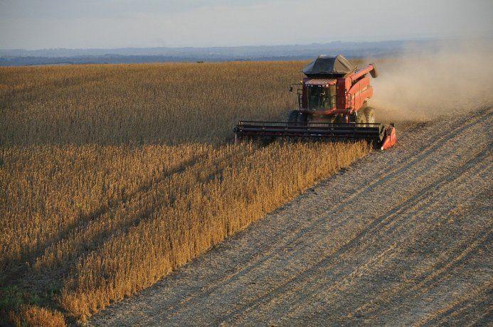 La soja subió 1,6% y superó los u$s540 por tonelada