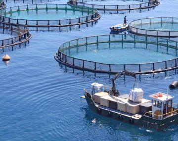 Esta iniciativa busca iniciar el camino de la promoción mundial de la acuicultura argentina.