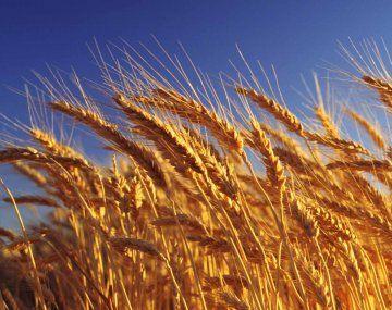 Ingresarían durante enero u$s 5.600 M por exportaciones de trigo y cebada