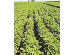 Avanzó la cosecha de soja en algunos lotes donde las máquinas pudieron entrar, luego de las lluvias de abril.