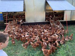 Son dos módulos a cielo abierto con 1150 gallinas que producen huevos pastoriles.