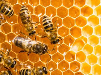 Boom apícola: la pandemia disparó el consumo de miel