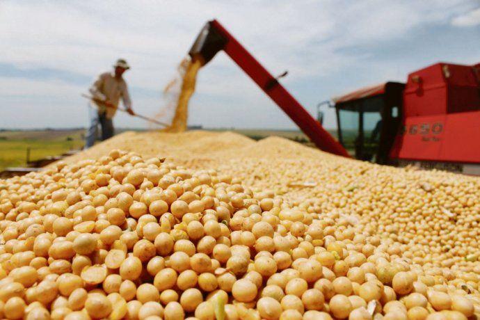 La soja, imparable: alcanzó máximo desde 2013 (u$s563)