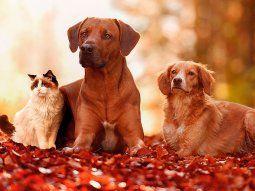 Seis consejos para cuidar a las mascotas maduras