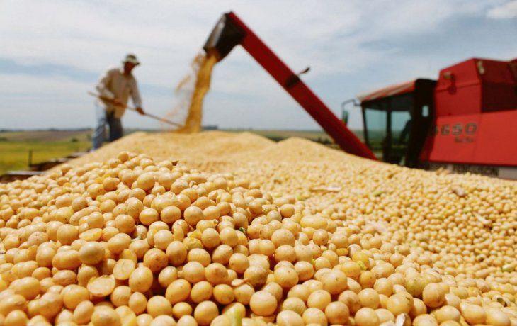 Afirman que la cosecha de soja en la Argentina será de 44 millones de toneladas y el maíz tendrá récord