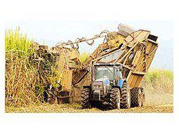 La cosechade azúcarestaríacayendo7%, lo quedejaríamargen másbajo para laexportación.Preocupa lasituación enel mercadointerno.