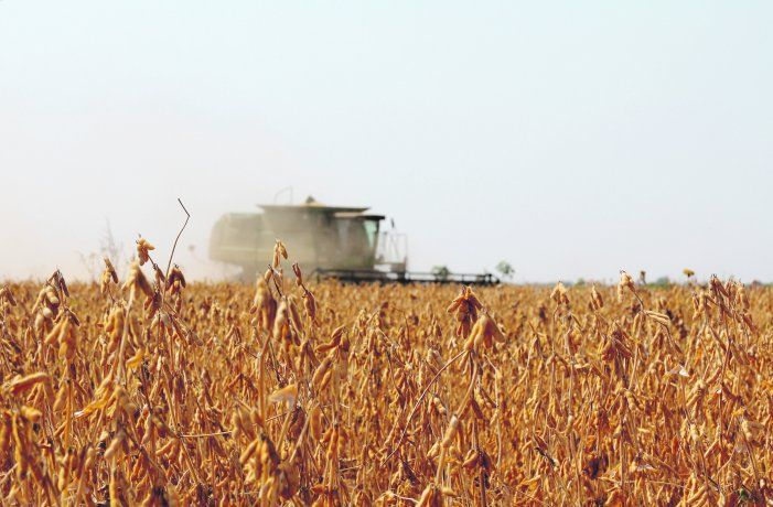 Gobierno suma presión a las agroexportadoras para que liquiden
