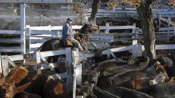 lanzan plan ganadero para sumar oferta de pequenos productores