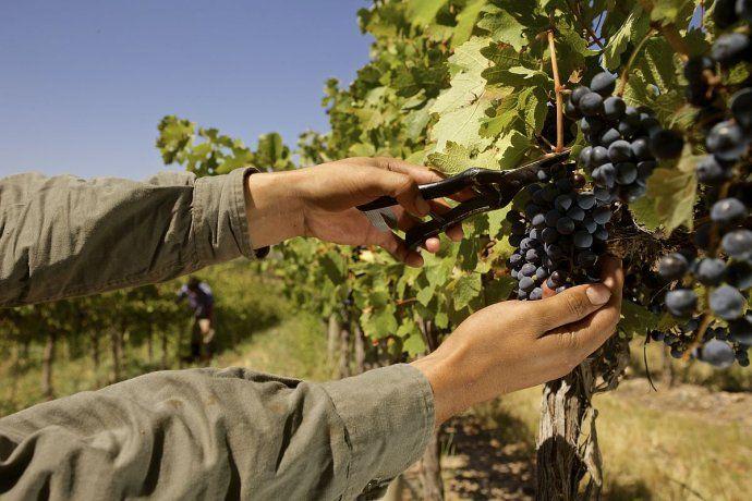 Las exportaciones de vino encabezaron la tabla.