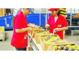 Desde Corrientes una Cooperativa citrícola llega al sur de Asia