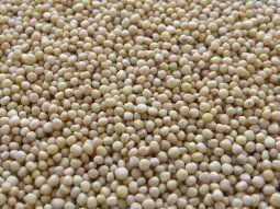 vuelan los granos: la soja opera en su nivel mas alto en 7 anos