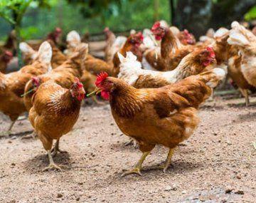 Sinergia Animal lanzó su reporte de seguimiento a 60 empresas de la industria alimentaria.