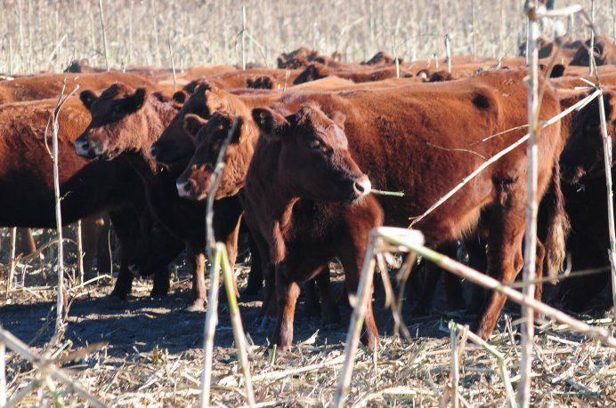 Analizarán cómo la ganadería contribuye a la sustentabilidad de los sistemas agroalimentarios