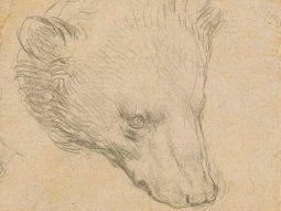 Cabeza de un oso, el dibujo de Leonardo Da Vinci.