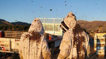 la historia de la empresa argentina que entrena abejas con tecnologia del conicet y se expande en el pais y eeuu