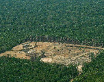 La tala ilegal causa estragos en la selva amazónica.