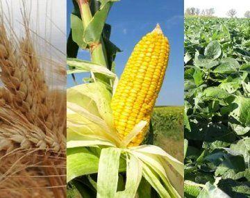 Las nuevas cotizaciones para las posiciones más cercanas reflejan el clima adverso para las cosechas en Brasil y en América del Norte.