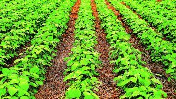 Desde que inició la pandemia, el precio de la soja acumula una suba de 95% en Chicago.