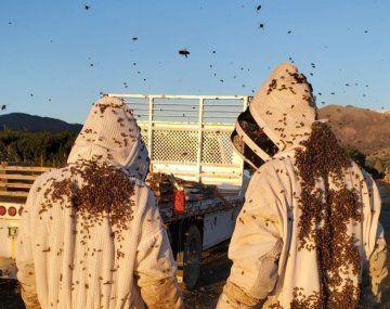 La historia de la empresa argentina que entrena abejas con tecnología del Conicet y se expande en el país y EEUU