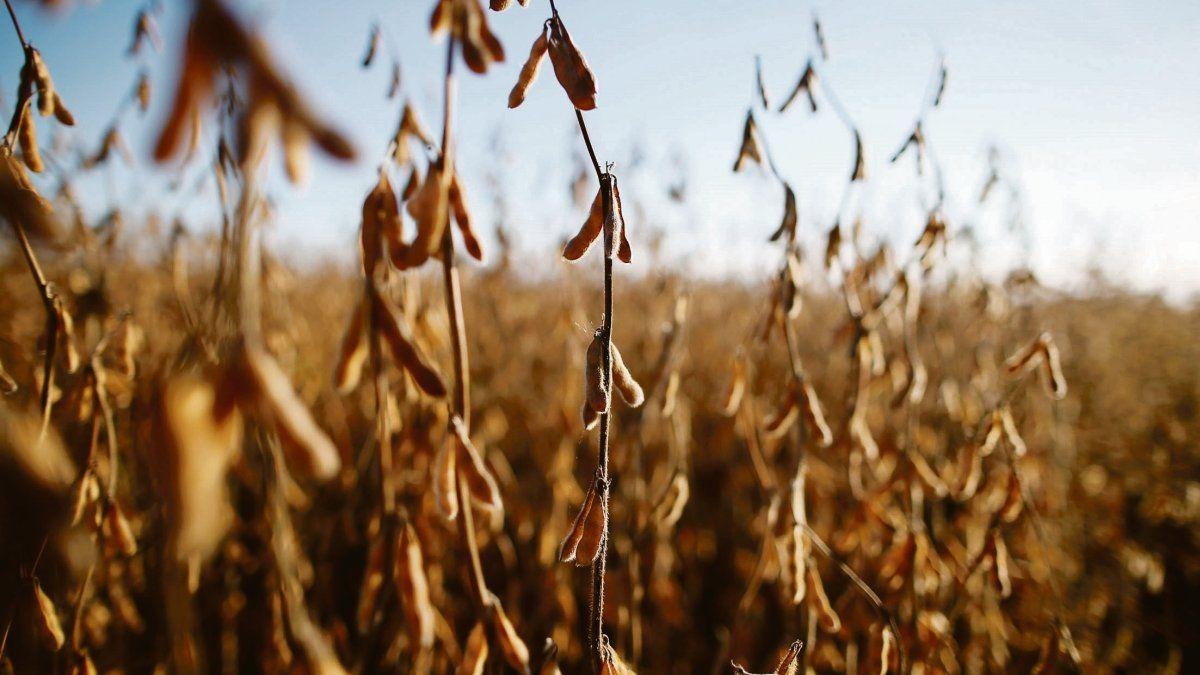 Soja: por suba de precios, productores aceleraron ventas
