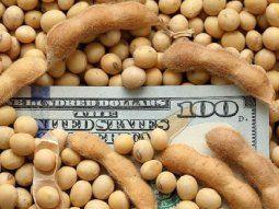 """El descenso de la soja se registraba """"luego de que el informe semanal emitido por el Departamento de Agricultura de los Estados Unidos (USDA), mostrara mejores calificaciones de las esperadas por el mercado en el progreso del cultivo""""."""
