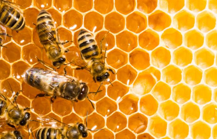 boom apicola: la pandemia disparo el consumo de miel