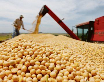 La soja pierde terreno entre los productores ante los mayores margenes del maíz,