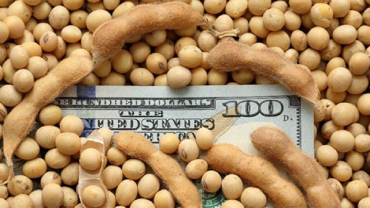 Para ahorristas: cómo invertir en soja o maíz