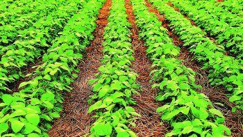 hito: la soja supera los u$s600 por primera vez en 9 anos (duplico su valor en solo 14 meses)