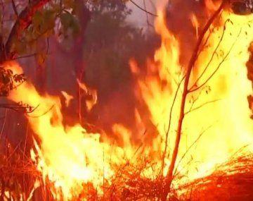 Los incendios en el Amazonas amenazan con destruir el principal pulmón verde del planeta.