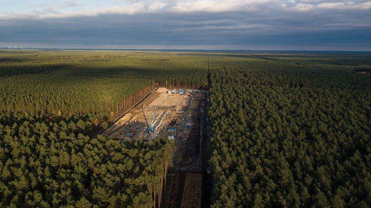 El frondoso bosque de pinos donde se está instalando la megafábrica.