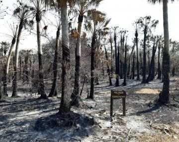 Los incendios del jueves pasado destruyeron un total de 80 hectáreas del parque provincial San Cayetano de Corrientes.