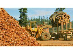 La industria forestal enfrenta una de las peores crisis de los últimos 50 años.