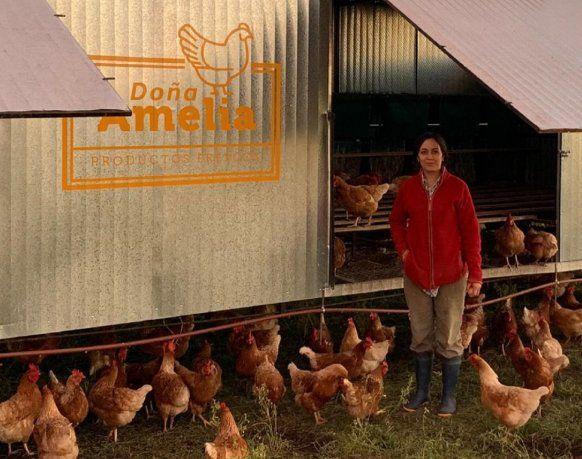 Camila le da de comer a las gallinas, cosecha los huevos, los clasifica y los empaca en el maple.