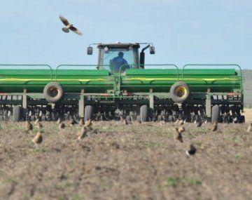Las condiciones secas de la última semana afectan el desarrollo del trigo del ciclo 2021/22.
