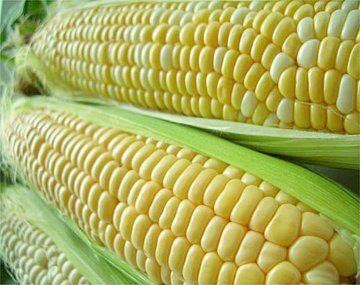 Vietnam es el principal destino para el maíz argentino, en un 22% de lo comercializado, lo siguen en importancia Egipto y Argelia.